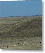 Wyoming Pronghorns Metal Print