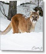 Wyoming Wild Cat Metal Print