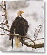 Yakama Canyon Eagle Metal Print