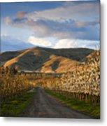 Yakima Valley Spring Metal Print