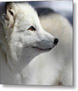 Yana The Fox Metal Print