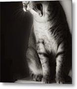 Yawning Metal Print