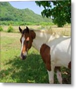 Yearling Colt In The Pasture Metal Print