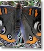 Yearning To Fly Metal Print