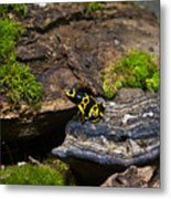 Yellow And Black Dart Frog Metal Print