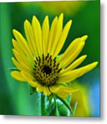 Yellow And Green 2 Metal Print