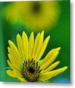 Yellow And Green 3 Metal Print