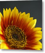 Yellow And Orange Gerber Metal Print