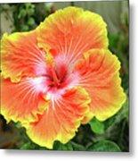 Yellow And Orange Hibiscus 2 Metal Print