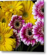 Yellow And Pink Gerbera Daisies Metal Print