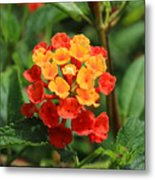 Yellow And Red Flowers On A Branch Metal Print