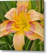 Yellow And Red Lily Metal Print