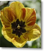 Yellow And Red Tulip Center Squared Metal Print