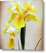 Yellow And White Iris Textured Metal Print