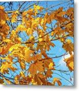 Yellow Autumn Leaves 2 Metal Print