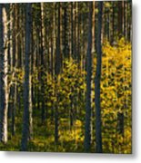 Yellow Autumn Trees In Forest Metal Print
