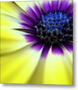 Yellow Beauty With A Hint Of Blue And Purple Metal Print