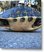 Yellow Bellied Turtle 004 Metal Print