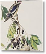 Yellow Bellied Woodpecker Metal Print