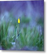 Yellow Bells Metal Print