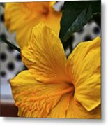 Yellow Belly Metal Print