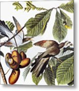 Yellow-billed Cuckoo Metal Print