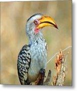 Yellow-billed Hornbill Metal Print