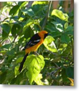 Orange Bird Metal Print