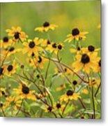 Yellow Black Eyed Susan Wildflowers In Summer Metal Print