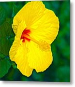 Yellow Blossom Metal Print