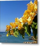 Yellow Bougainvillea Over The Mediterranean On The Island Of Cyprus Metal Print