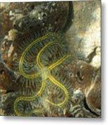 Yellow Brittle Star Under The Dock Metal Print