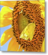Yellow Butterfly And Sunflower Metal Print