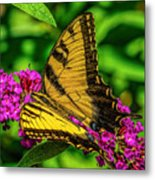 Yellow Butterfly In The Garden Metal Print