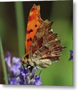 Yellow Butterfly No.2 Metal Print