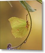 Yellow Butterfly On Blue Forget-me-not Flowers Metal Print