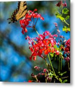 Yellow Butterfly On Red Flowers Metal Print
