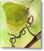 Yellow Butterfly On The Branch Metal Print