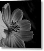 Yellow-bw-1 Metal Print by Fabio Giannini