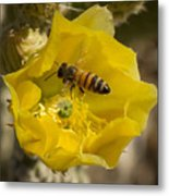 Yellow Cactus Flower With Wasp Metal Print