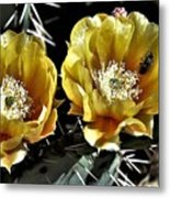 Yellow Cactus Flowers Metal Print