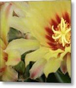 Yellow Cactus Plant Flower Metal Print