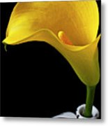 Yellow Calla Lily In Black And White Vase Metal Print by Garry Gay