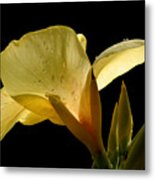 Yellow Canna Metal Print by Jeannie Burleson