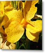 Yellow Canna Lily Metal Print by Shawna Rowe