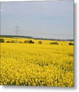 Yellow Canola Field Metal Print