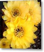 Yellow Cereus Metal Print