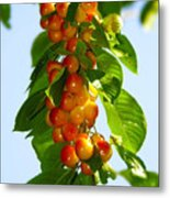 Yellow Cherries Metal Print