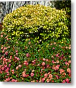Yellow Coleus And Lantana At Pilgrim Place In Claremont-california Metal Print