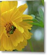 Yellow Cosmos Flower Metal Print